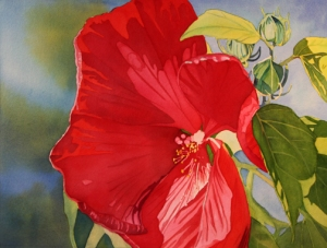 Red Hibiscus, Watercolor